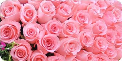 戴安娜粉玫瑰,黄莺,石竹梅外围 包 装 英文旧报纸半圆形包装,精美花结图片
